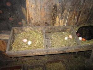Фото гнезд для несушек