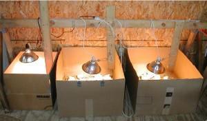 Обогрев цыплят в коробке с помощью ламп