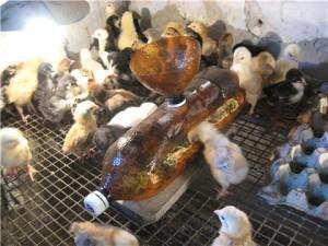 Пластиковая поилка для цыплят