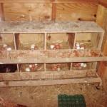 Ящики для кур-несушек