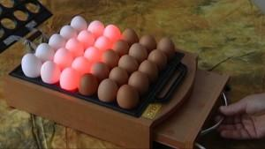 Проверка яиц на просвет