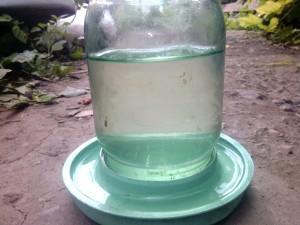 Для хорошего иммунитета добавляйте чиктоник и биовит в воду