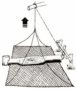 Схема ловушки из сетки для птиц