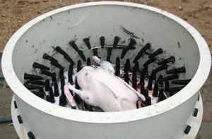 Устройство для ощипывания гусей