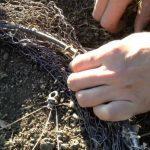Создание ловушки для куропатки