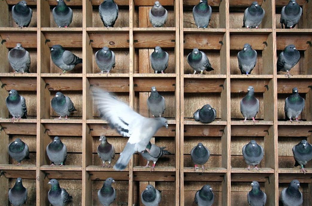 Организация постоянного места обитания птиц