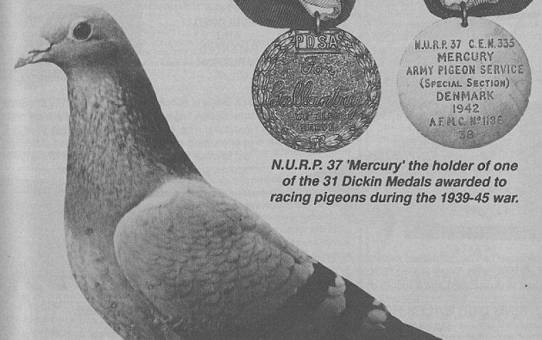 Смелый и отважный «почтальон» Меркурий