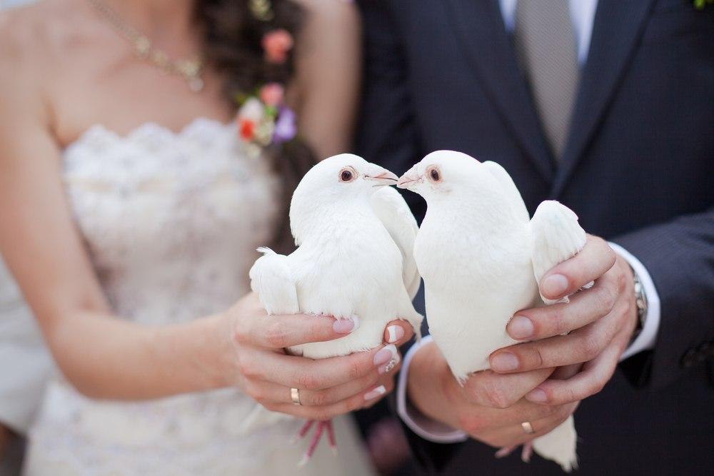 Использование почтовых голубей для организации свадеб